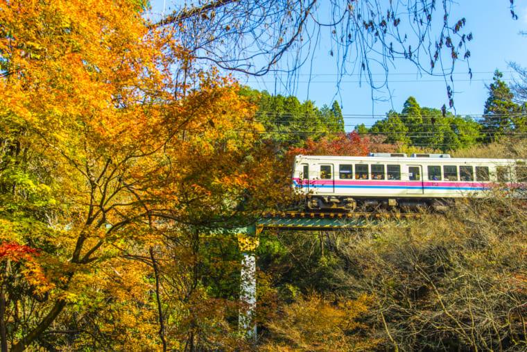 京都 叡山電車と紅葉