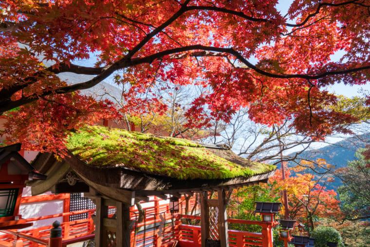 京都 鞍馬寺の紅葉